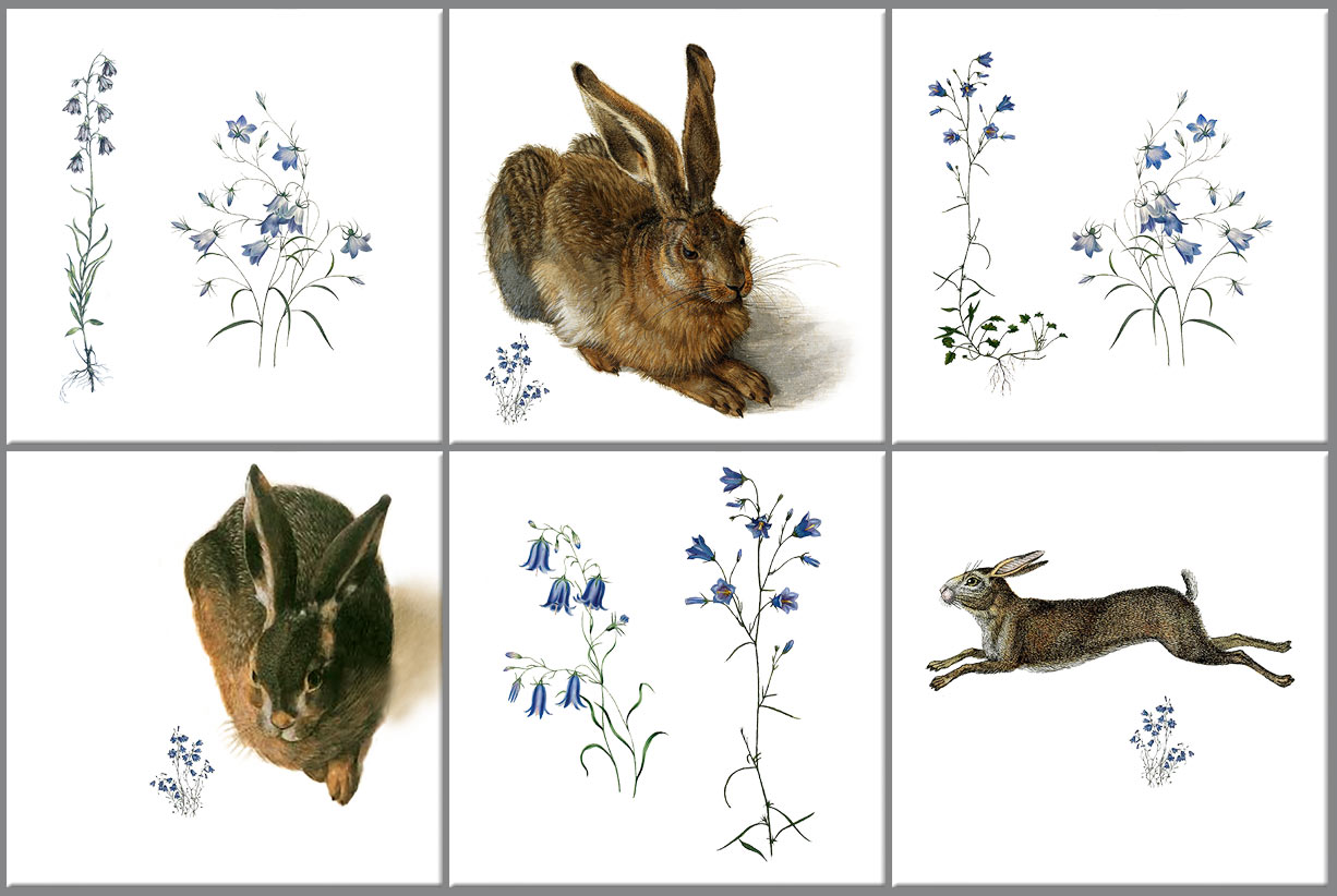 Hares and harebells, symbols of spring