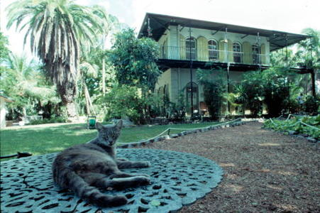 Ernest Hemingway House. The descendants of the original cats still run the place