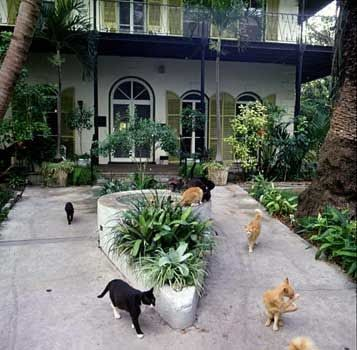 Ernest Hemingway House, cats